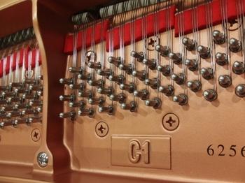 CIMG1354 (490x368).jpg