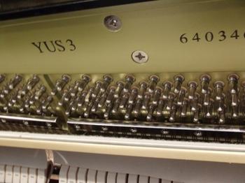 CIMG1581 (550x413).jpg